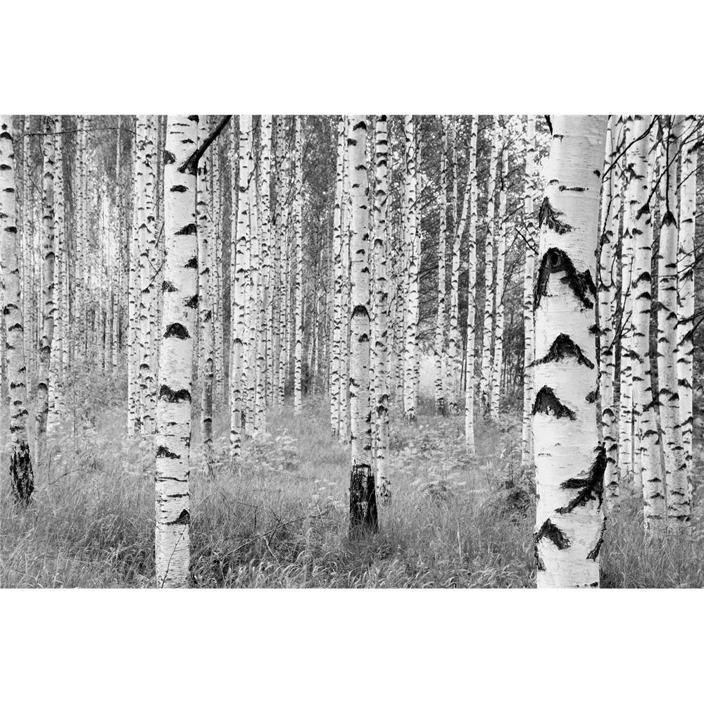 Komar by Brewster XXL4-023 Birch Forest Wall Mural