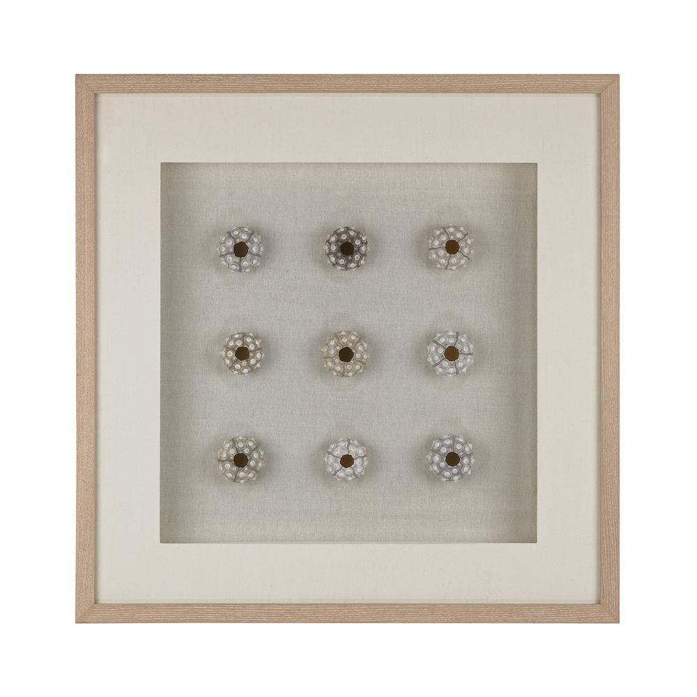 Dimond Home by Elk 168-011 Sea Urchin Wall Décor in White / Natural Shells